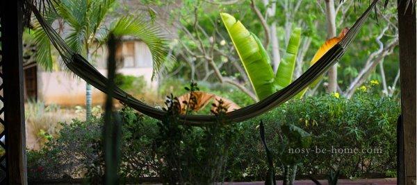 Photo 8 - Domaine éco-touristique à Nosy Be
