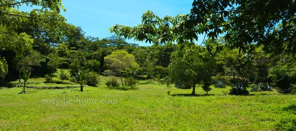 Photo 7 - Domaine éco-touristique à Nosy Be